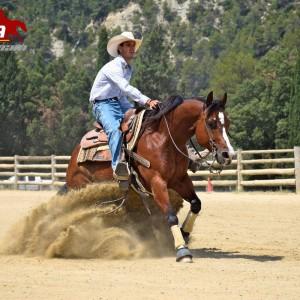 Venta de caballos. Potros y caballos venta en España – NaturalHipic