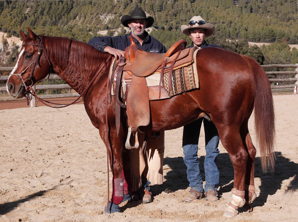 C ballester saddles las monturas de los campeones for Monturas para caballos