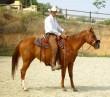 Future Gal. Yegua Quarter Horse