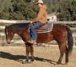 Susie Oak Star. Quarter Horse en venta.